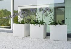 Agapanthus in a set of white modern pots. always a winner Modern Outdoor Living, Outdoor Life, Driveway Landscaping, Modern Landscaping, Container Plants, Container Gardening, Best Potted Plants, Modern Garden Design, Concrete Planters
