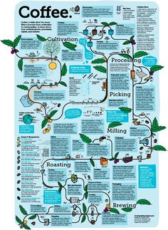 Coffee production. A visual knowledge trip from growing coffee plants to producing coffee beans for your daily cup of coffee.  #coffee, #coffeebean, #coffeeplant, #coffeeprocess, #infographic, #infographics, #coffeegrowing