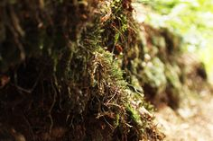 #forest  #tree  #moss