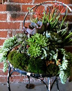 Old rusty chair turned into a 'succulent' chair of all kinds.......love succulents, so neat!!