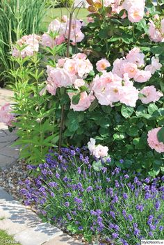 Gorgeous flowers in the garden Rose Companion Plants, Companion Planting, Sacred Garden, Shrub Roses, Lavender Garden, Good Morning Flowers, Peonies Garden, Garden Cottage, Front Yard Landscaping