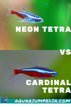 Fish Aquariums, Freshwater Aquarium Fish, Tanked Aquariums, Saltwater Aquarium, Live Aquarium, Aquarium Fish Tank, Neon Tetra Fish, Fish Tank Themes, Fish Care