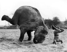 It's all fun and games till the elephant squishes the guy