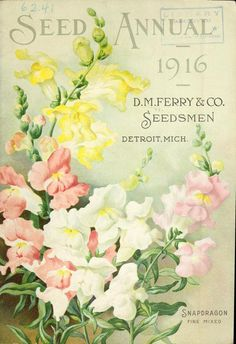 Snapdragon. Fine mixed. Seed Annual 1916. D.M. Ferry & Co. Seedsmen. Detroit, Mich.
