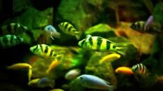 Aquarium Meditation Relax & Sleep   Under Water Meditation
