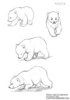 Daily Animal Sketch – Polar Bear cubs – Last of the Polar Bears Animal Sketches, Animal Drawings, Cute Drawings, Art Sketches, Drawings Of Bears, Grizzly Bear Drawing, Bear Sketch, Bear Cubs, Grizzly Bears
