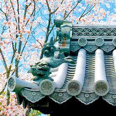 、 京都市【妙心寺】 、 、 獅子さんも嬉しそう 、 2枚目は大好きな木瓜 、 、 、 2018.4.1撮影 #京都市 #桜 #瓦 #獅子 #木瓜 #木瓜の花 #ボケの花 #はなまっぷ桜2018 #妙心寺 #退蔵院 #青空と桜 #Loves_Nippon #Lovers_Nippon #ig_japan #icu_japan #bestjapanpics #japan_daytime_view #instagramjapan #special_shot_ #loves_united_asia #キリトリ部 #けしからん風景 #スマホ写真部 #スマホ越しの私の世界 #iPhoneSEで撮影 #flower_special_ #お写んぽ #そうだ京都行こう