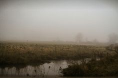 foggy marsh | by imemgee