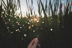 nature field grass leaves person hand hold sparklers fireworks sparkle crackle lights orbs still bokeh Einstein, Rolling Meadows, Travel Wallpaper, Change Is Good, Free Blog, The Hamptons, Grateful, How To Start A Blog, Eco Friendly