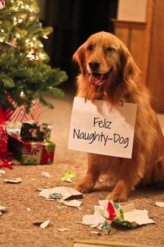 "Giggles over a CHRISTMAS picture that includes a dog with sign that reads, ""Feliz Naughty-Dog"".  Poor guy!  I hope Santa still fills his stocking with lots of bones, toys, & treats!"