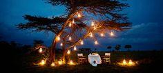 romantic-tree-lighting - Once Wed