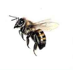 Honey bee tattoo - probably my favourite design