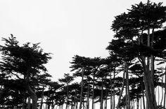 💡 trees black and white  - new photo at Avopix.com    📷 https://avopix.com/photo/22661-trees-black-and-white    #trees #tree #fir #black and white #pine #avopix #free #photos #public #domain