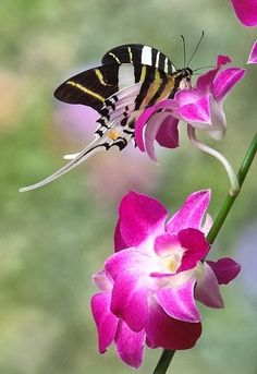 janetmillslove:  Swordtail Symphony moment love