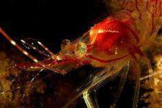 As imagens da primeira expedição da ONG Oceana ao fundo do Mar do Norte