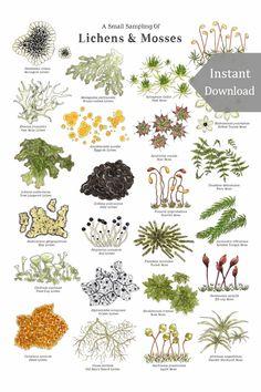 Botanical Drawings, Botanical Illustration, Botanical Prints, Horticulture, Garden Plants, House Plants, Forest Plants, Printable Poster, Plant Identification