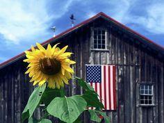 A beautiful barn, American flag & a sunflower = cool pic
