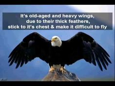 Inspirational and Motivational Video - Rebirth of an Eagle ~ Life Coach ~ Kanika