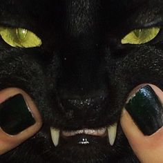 Discovered by Find images and videos about black, aesthetic and cat on We Heart It - the app to get lost in what you love. Wow Photo, Cat Aesthetic, Aesthetic Grunge, Cute Cats, Cute Animals, Creatures, Mood, Pets, Dark