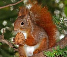 as a child all call me squirrel ... lol