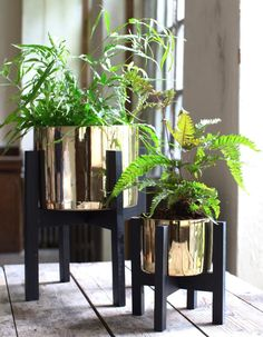 Gold Planter On A Stand