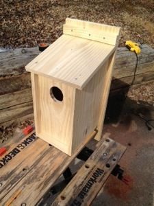 diy birdhouse plans build a screech owl nest box the screech owl is a year round resident in nearly every state across the county they primarily