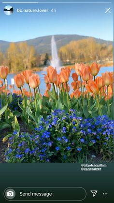 Send Message, Addiction, Messages, Plants, Garden, Garten, Planters, Text Posts, Tuin