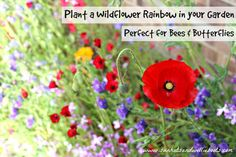 Sun Hats & Wellie Boots: Grow Your Own Wildflower Rainbow - Perfect for Bees & Butterflies