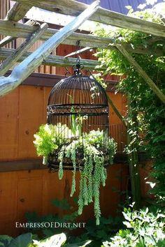 Succulents in bird cage