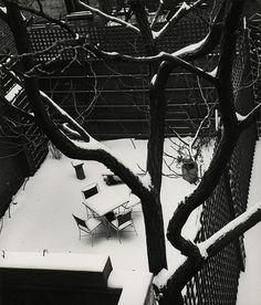 by André Kertész, Backyard in Snow, 1945