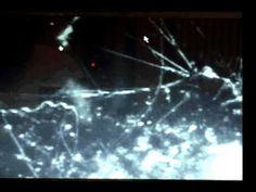 Lyme disease spirochetes