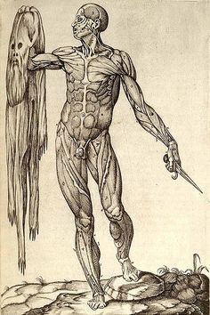 1559 anatomical plate by Juan Valverde de Amusco, a figure holds a knife in one hand and his own skin in the other
