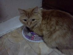 This is his way of letting us know the water bowl is empty. cute cat