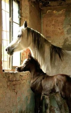 See more ideas about Horses, Beautiful horses and Horse love. All The Pretty Horses, Beautiful Horses, Animals Beautiful, Animals And Pets, Baby Animals, Cute Animals, Funny Animals, Horse Pictures, Animal Pictures