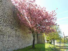 Boulogne sur Mer - 2013