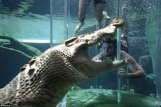 There's a theme park in the Australian city of Darwin where you can swim with huge crocodiles. The attraction is called 'Cage of death'. Of course, people who long to try this attraction are put in a glass box, but still, the pictures give shivers, especially when you see the size of a crocodile. Would you like to experience something similar?