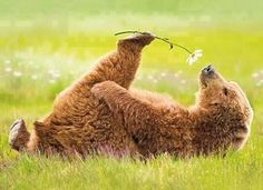 Bear smells the flowers