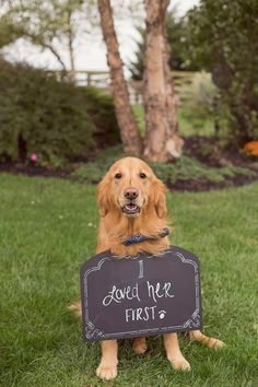 An elegant DOY Nashville wedding centered around the bride and grooms love for music and their golden retriever