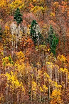 """""""The autumn color palette of Pieria mountains"""" by Hercules Milas 