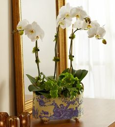 English Orchid Garden - three-stem white orchid in an elegant blue and white print tin with gold handles and feet $114.99 #englishorchid #english #orchid #englishflowers