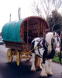 Complete with the Gypsy Vanner
