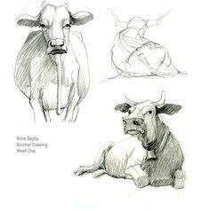 Animal Drawing - CGMA 2D Academy
