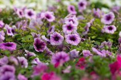 https://www.facebook.com/pages/Oleander-Garden/1557159397880315?fref=ts