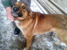 Catelul strazii in Codlea My Town, Dogs, Animals, Animales, Animaux, Pet Dogs, Doggies, Animal, Animais