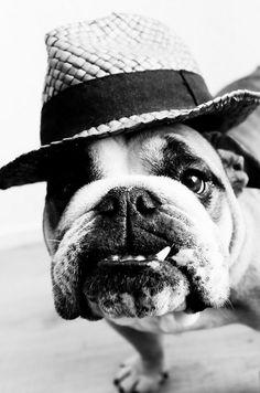 yes. #english #bulldog #englishbulldog #bulldogs #breed #dogs #pets #animals #dog #canine #pooch #bully #doggy