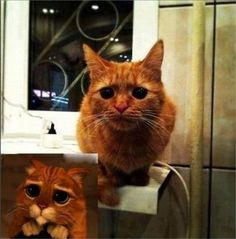 és el gato con botas!!!! quina monada!