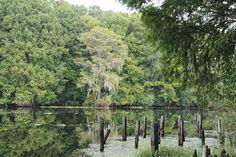 Florida's water Airboat Rides, Florida Water, Vineyard, Travel, Outdoor, Viajes, Outdoors, Destinations, Vineyard Vines