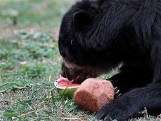 #Zoológico de #Cali  #Animales son los consentidos por las altas temperaturas. #CaliCo #OrgullodeCali