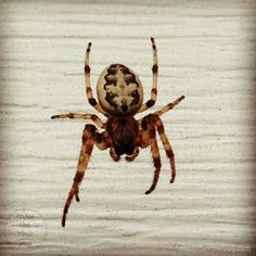 spider | arachnophobia | enjoytheviewblog.com | #ad #insects #arachnids #phobias
