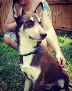 Meet Kodiak, an adoptable Husky looking for a forever home. If you're looking for a new pet to adopt or want information on how to get involved with adoptable pets, Petfinder.com is a great resource.
